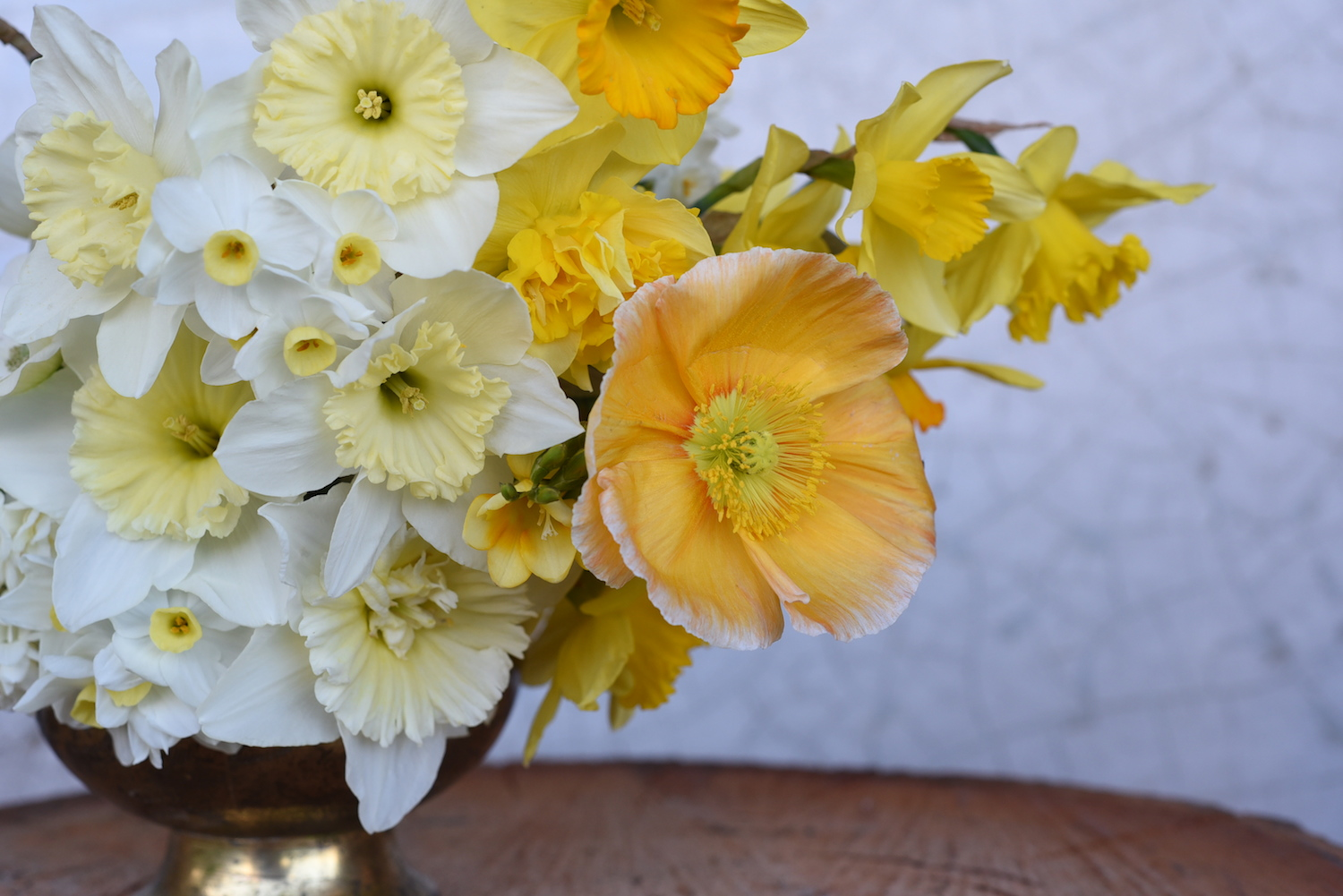 daffodils and poppy